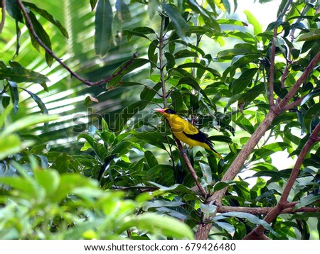 exotic bird #679426480
