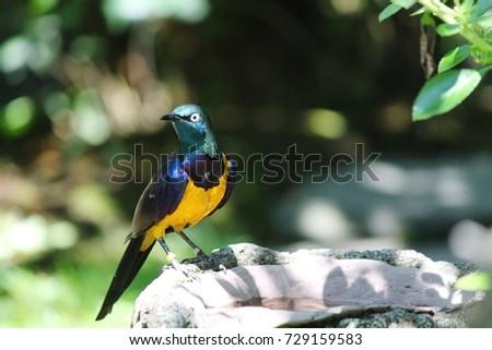 Exotic Bird #729159583