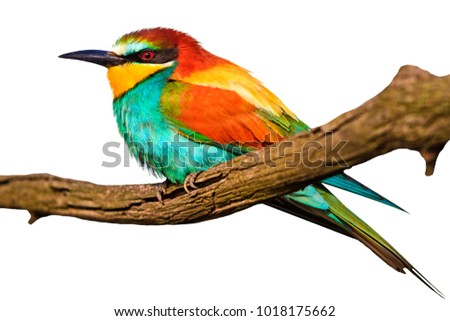 exotic bird on a branch isolated on white , nature is the best artist, design