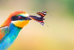 Exotic bird with a colored butterfly in the beak