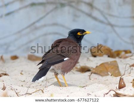 exotic birds #677627122