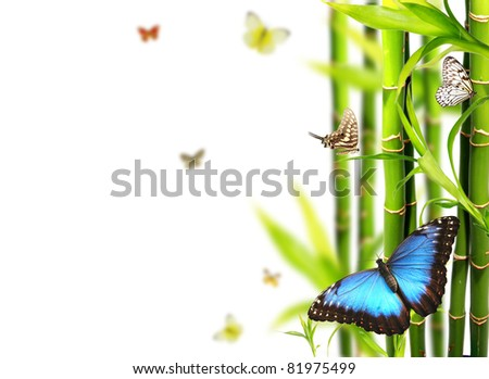 Exotic butterflies in bamboo, isolated on white background