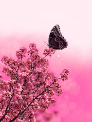 exotic butterfly on pink flower design