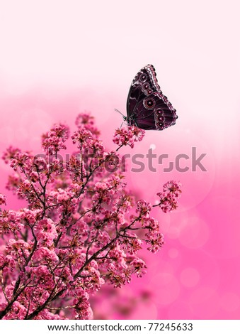 exotic butterfly on pink flower design - stock photo