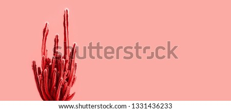 Exotic cactus banner background.Minimal.Abstract minimal design #1331436233