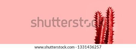 Exotic cactus banner background.Minimal.Abstract minimal design #1331436257