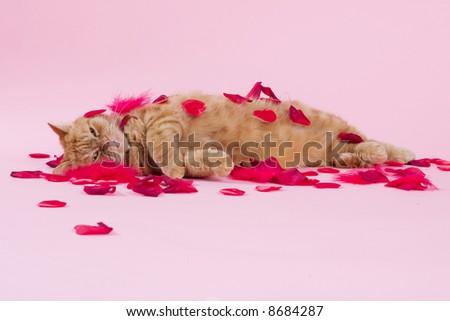 Exotic cat lies in-between rose leaves