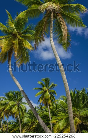 Exotic coast of the Dominican Republic with exotic palm trees on the golden sand, Caribbean Island #225254266