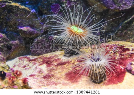 exotic corals underwater abstraction aquarium