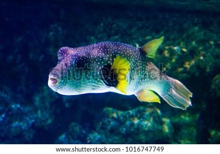 Exotic fish at La Rochelle #1016747749