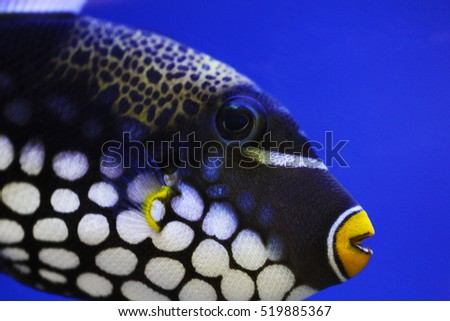 exotic fish of balck  white ...