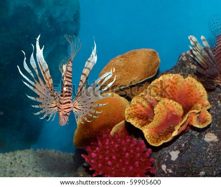 Exotic fish with Coral reef background