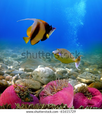 Exotic fishes, Underwater world Red Sea, Egypt