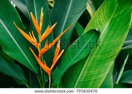 exotic flower on dark green tropical foliage nature background