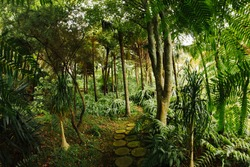 Exotic forest background. Path through the jungle. Tropical park landscape. Palm tree view. Wooden walkway in nature. Green summer woods.
