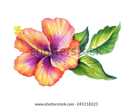 exotic hibiscus flower with green leaves, watercolor illustration isolated on white background