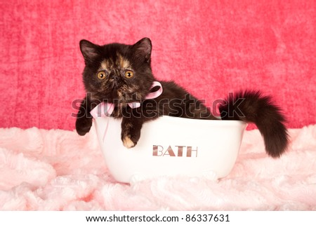 Exotic kitten lying in miniature white bath tub on pink background