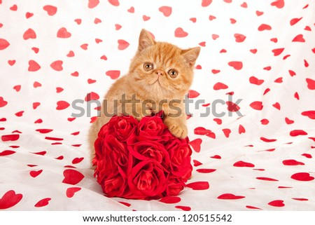 Exotic kitten on Valentine theme background with cushion faux fur rose topiary