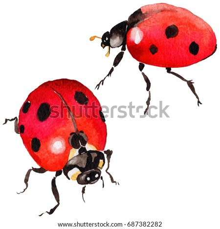 exotic ladybug wild insect in a ...