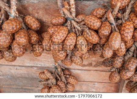 Exotic palm fruit called Jupati (Raphia taedigera) for sale at Ver-o-Peso market, Belem, Para, Brazil. The jupati is very common in the Amazon rainforest in Brazil. Photo stock ©