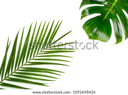 exotic palm leaves monsters on a white background