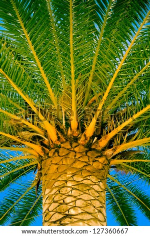 Exotic palm on the saturated sky background