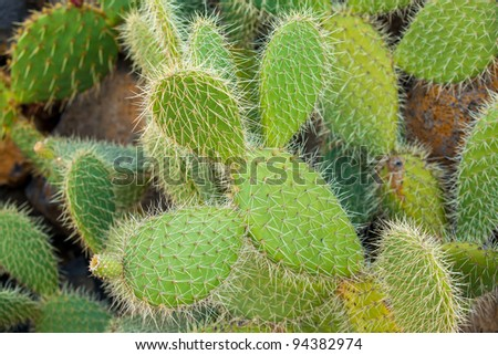 Exotic plants. Close-up of a prickly cactus