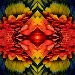 Exotic red and fire of colorful background made from Scarlet Macaw's parrot feathers, beautiful texture
