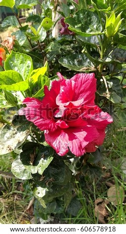 EXOTIC RED FLOWER #606578918