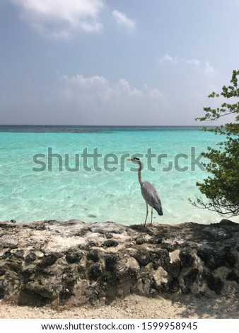 Exotic scene and exotic bird in Maldives