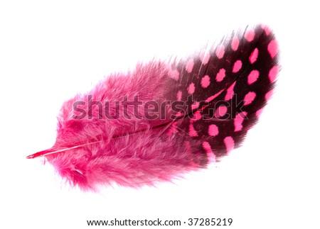 Exotic soft beautiful feather on white background stock photo