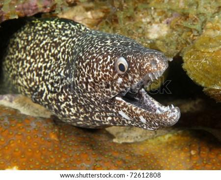 Roatan Coral Snake Ocean Sea Snake Eel Coral
