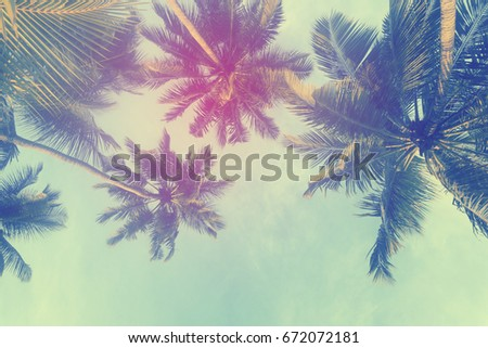 Exotic summer tropical palm tree background #672072181
