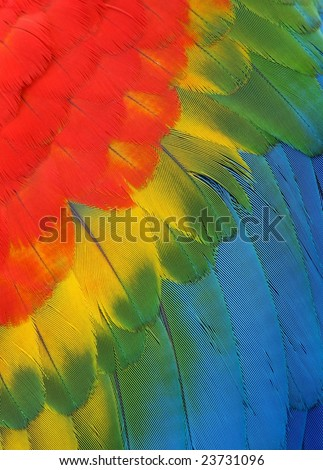 Exotic texture feathers background, closeup bird wing. Colorful parrot feather background