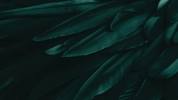 Exotic texture feathers background, closeup bird wing. Dark green feathers for design and pattern.