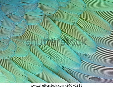 exotic texture feathers background, closeup parrot wing