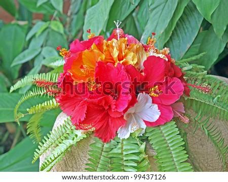 Exotic Thai tropical flower