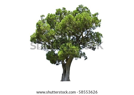 exotic tree isolated on white