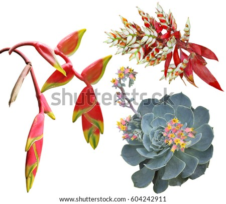 Exotic tropical flowers set isolated on white background #604242911