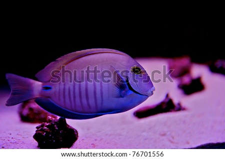 Exotic underwater image of a fish in Cozumel Mexico.