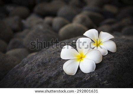 Exotic white flowers on the dark grey stone. Wellness and harmony symbol