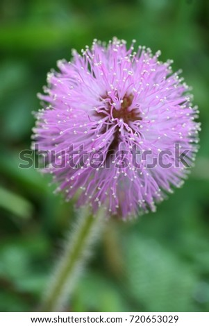 Exotic Wild Flower #720653029