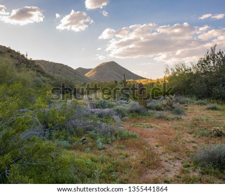 Expansive views of the Sonoran Desert in Arizona during spring time shows the many hues, the green foliage due to the large amount of rain during winter, the yellows, blues and oranges of the wild flo #1355441864
