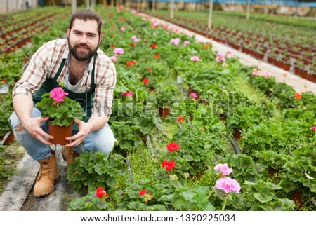 Experienced young worker of glasshouse arranging blooming geranium plants #1390225034