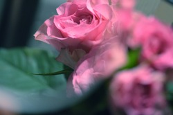 Experimental glass ball pink rose photo