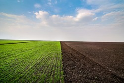 experimental planting of cereals and arable land in early spring