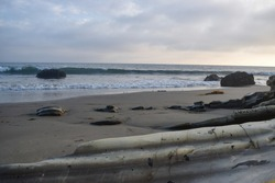 Exploring the alien landscape of Refugio State Beach at low tide.
