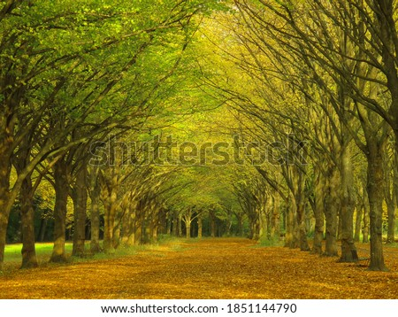 Explosion of autumn colors on a perfectly alligned boulevard of trees at the Amsterdame Bos, the largest park in the capital of the Netherlands, Amsterdam Stockfoto ©