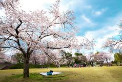 Expo '70 Commemorative Park at spring in Osaka, Japan