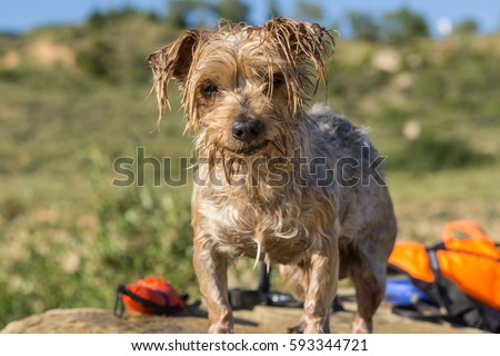 Doggy Images